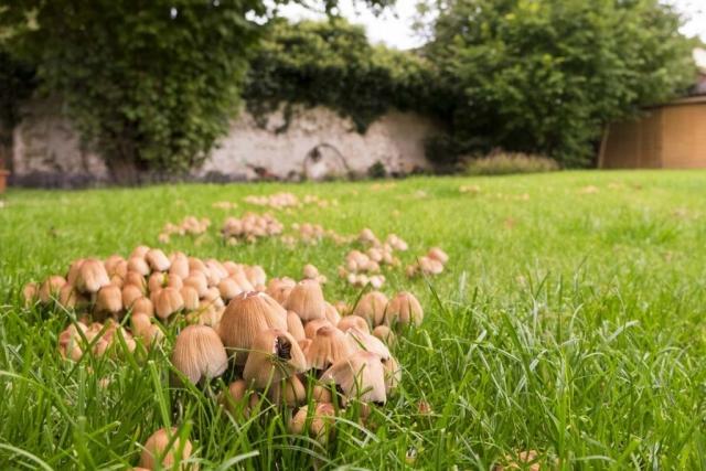 Grzyby w ogrodzie i jak je zwalczyć?