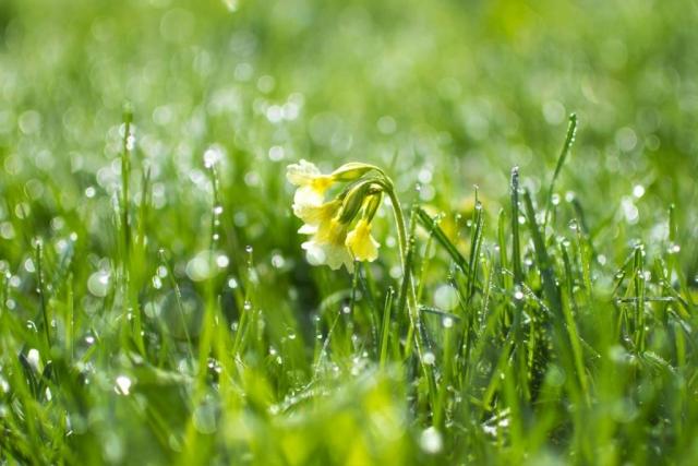 Trawnik idealny. Jak poprawić kondycję swojego trawnika? - Odchwaszczanie