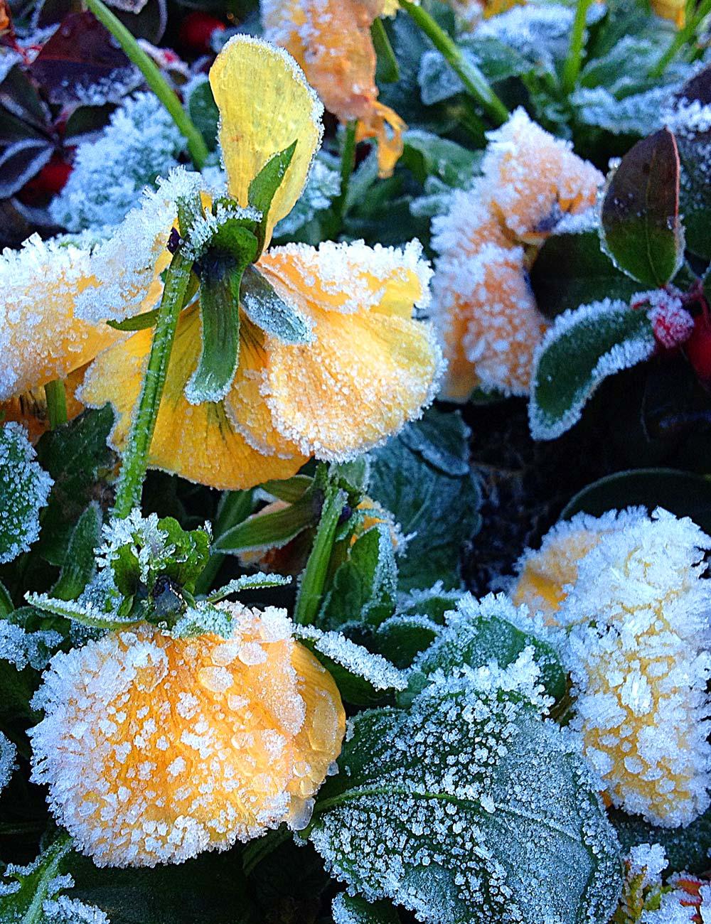 Zima w ogrodzie. Jak przygotować ogród do zimy?