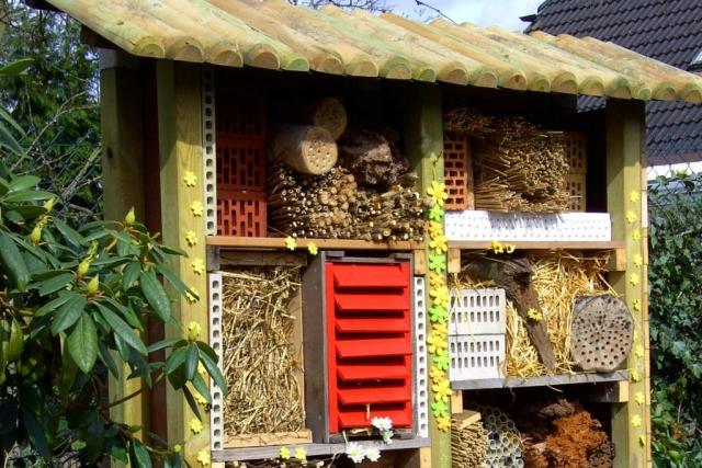 Jak pomóc pszczołom w ogrodzie | Białystok