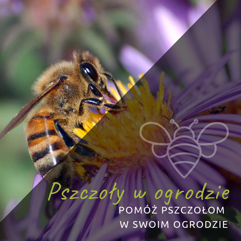 Pomóż pszczołom w swoim ogrodzie Białystok