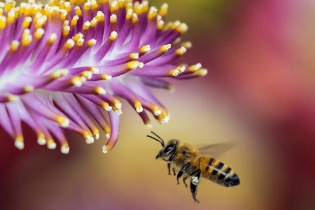 Pszczoły w ogrodzie | Białystok