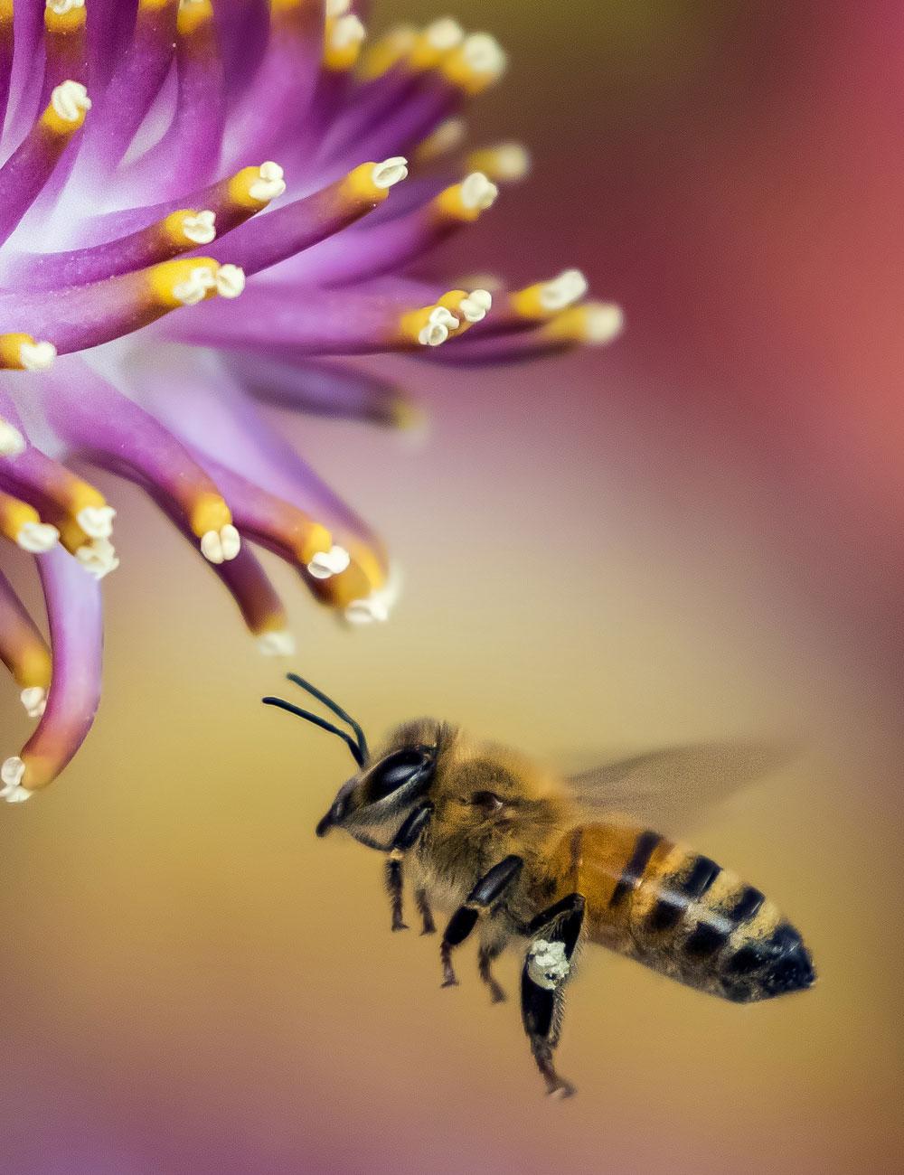 Pszczoły w ogrodzie Białystok
